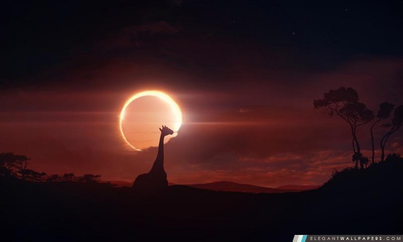 Eclipse, Arrière-plans HD à télécharger