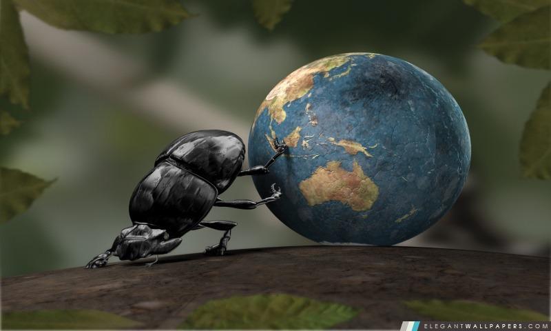 Illustration Beetle, Arrière-plans HD à télécharger