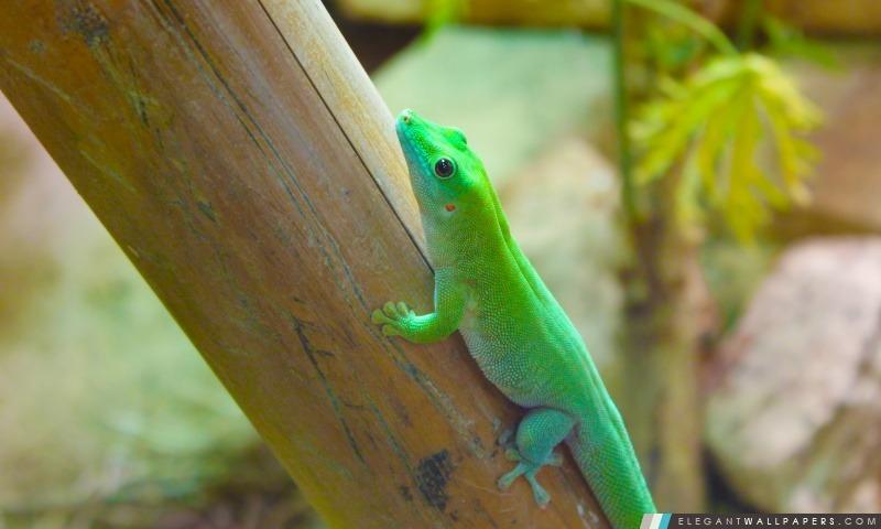 Reptiles, Arrière-plans HD à télécharger
