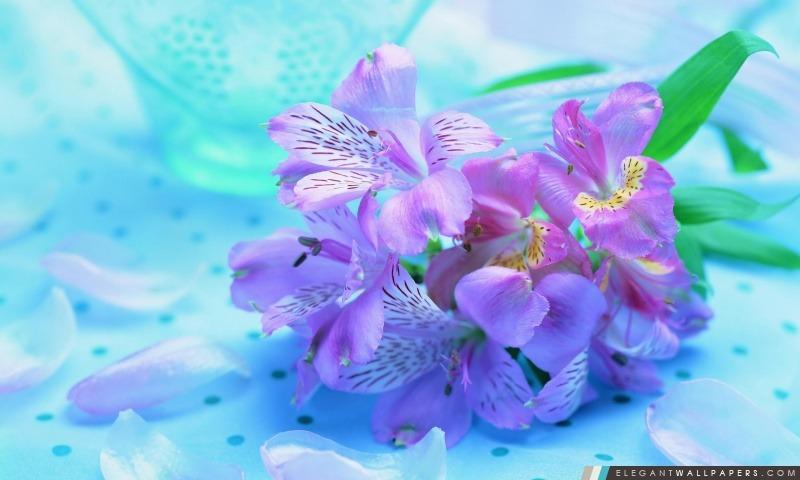 Fleurs mauve-clair. Fond d\'écran HD à télécharger | Elegant ...