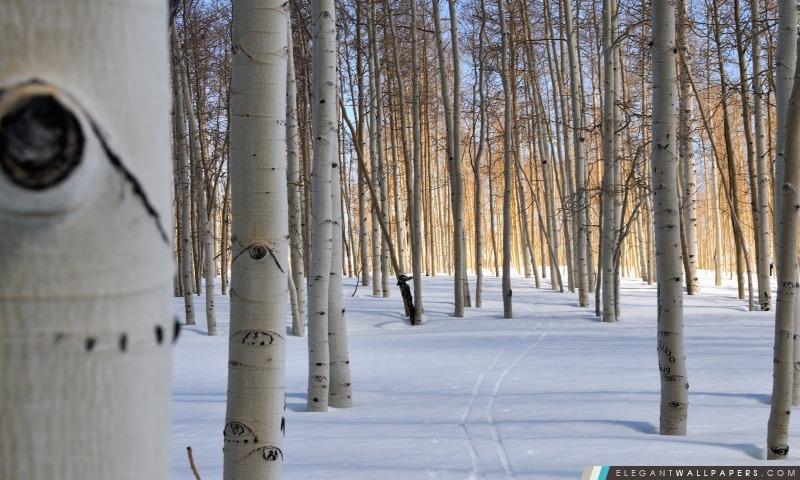 Fairview Canyon Ski de fond, Arrière-plans HD à télécharger