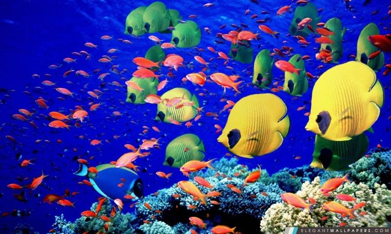 """Résultat de recherche d'images pour """"egypte fonds marins"""""""