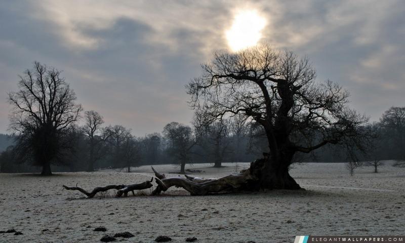 Vieil arbre, hiver, Arrière-plans HD à télécharger