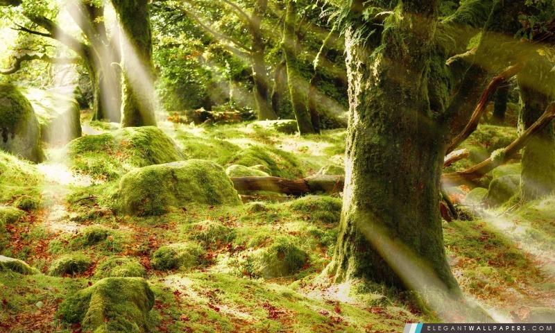 Lumière du soleil de forêt, Arrière-plans HD à télécharger
