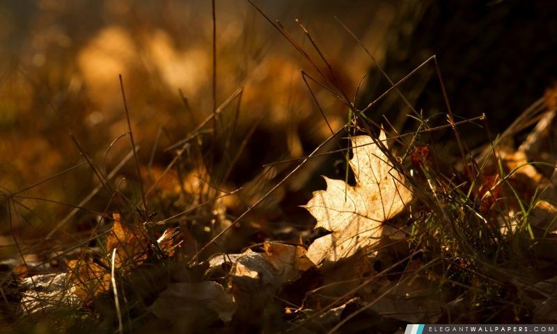 foto de Fallen Leaves automne Fond d'écran HD à télécharger