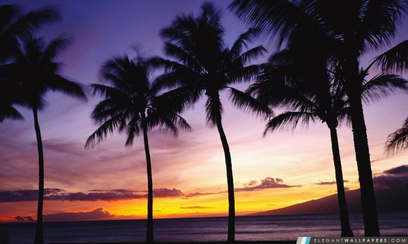 Palmiers, Coucher de soleil. Fond d'écran HD à télécharger | Elegant Wallpapers