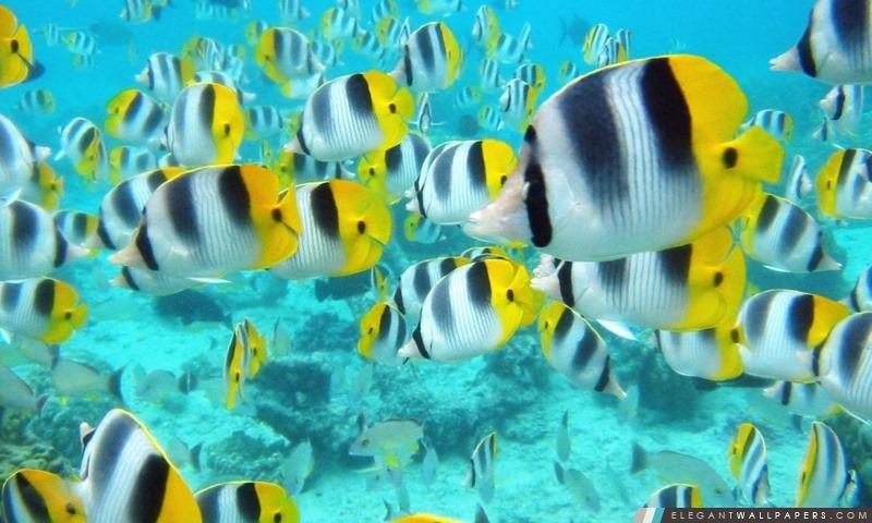 School Of Tropical Fish Tahiti Fond D Ecran Hd A Telecharger Elegant Wallpapers