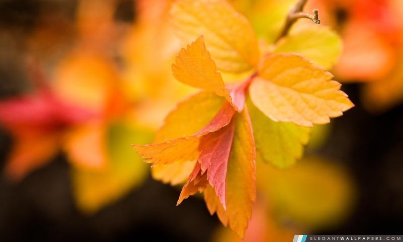 foto de Feuilles jaunes Close Up Fond d'écran HD à télécharger