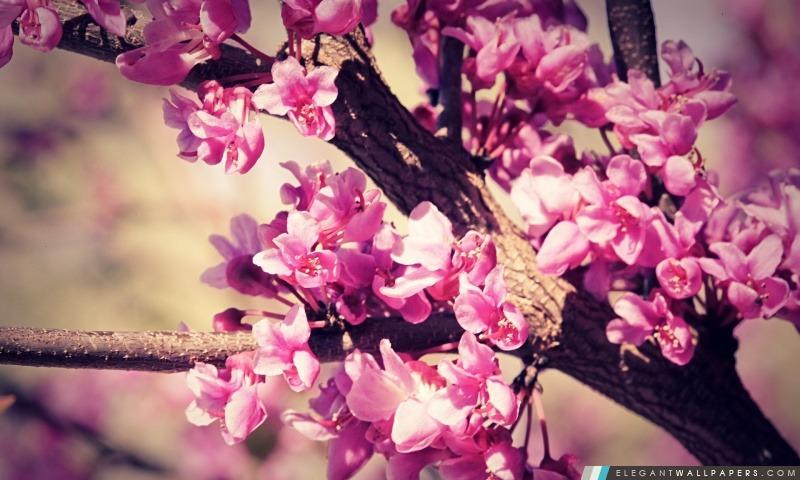 Fleur rose, Arrière-plans HD à télécharger