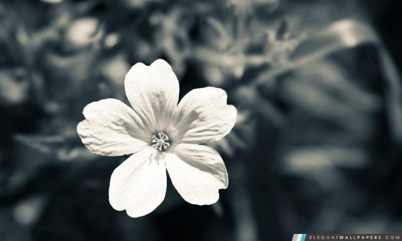 Fleur Blanche Fond D Ecran Hd A Telecharger Elegant Wallpapers