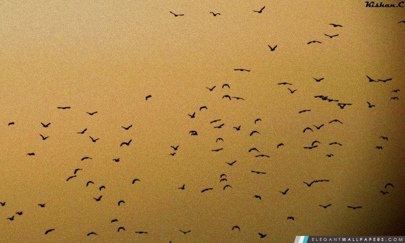 Oiseaux., Arrière-plans HD à télécharger
