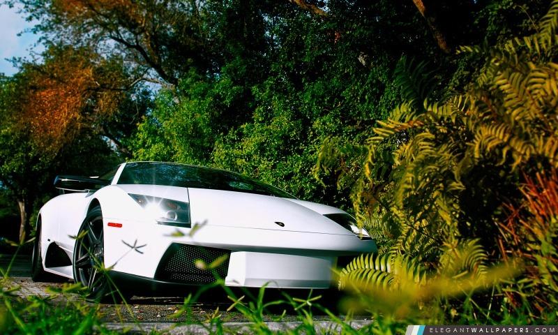 Blanc Lamborghini Murcielago, Arrière-plans HD à télécharger