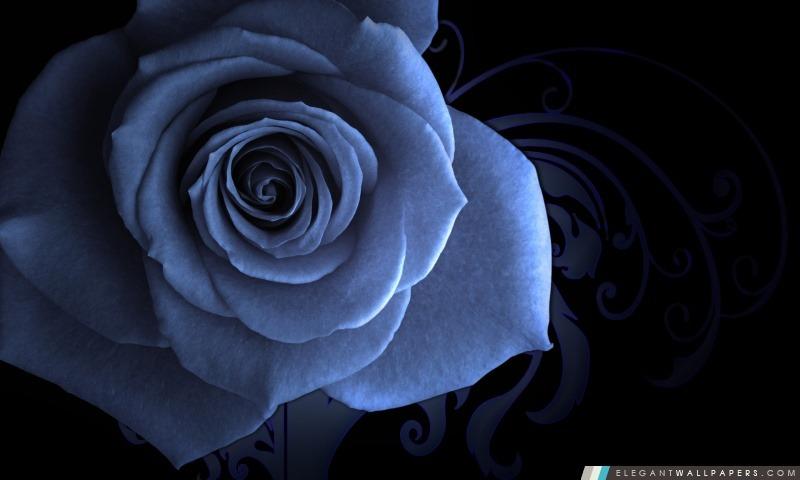 Blue Rose, Arrière-plans HD à télécharger