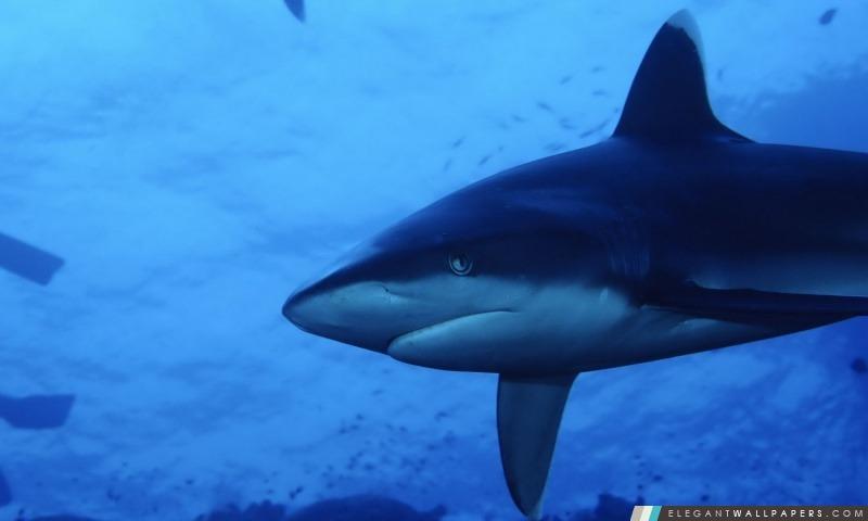 Requin Fond D écran Hd à Télécharger Elegant Wallpapers