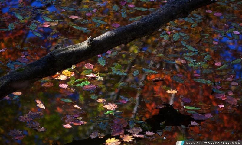 foto de Automne sur le lac Fond d'écran HD à télécharger