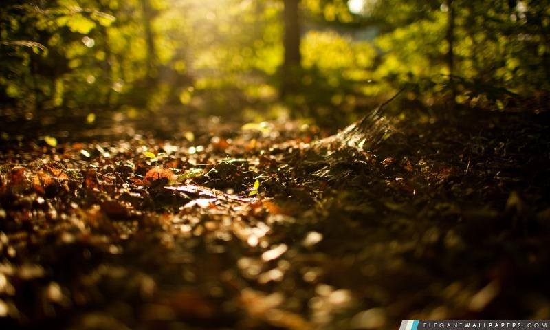 foto de Début de l'automne. Fond d'écran HD à télécharger   Elegant Wallpapers