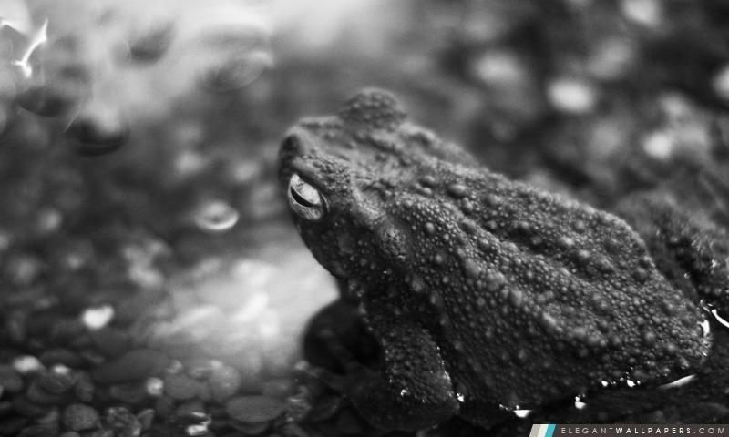 Black Frog, Arrière-plans HD à télécharger