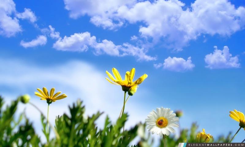 Contexte de printemps, Arrière-plans HD à télécharger