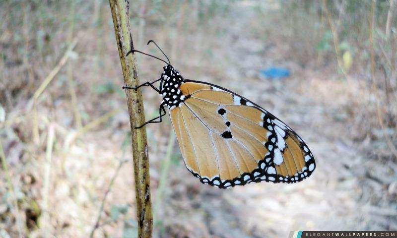 Beau papillon, Arrière-plans HD à télécharger
