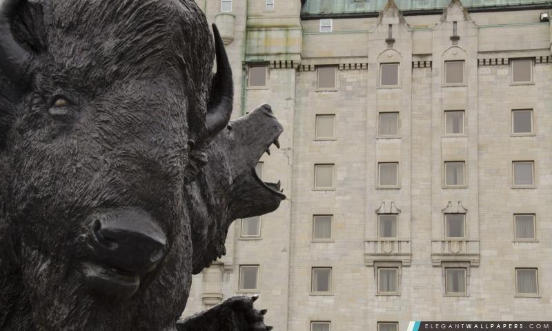 Le Buffalo, Arrière-plans HD à télécharger