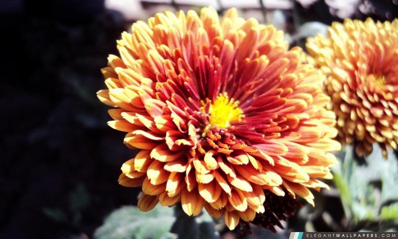Belle fleur, Arrière-plans HD à télécharger