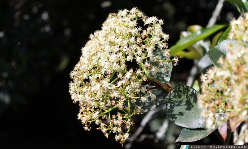 Fleurs, Arrière-plans HD à télécharger