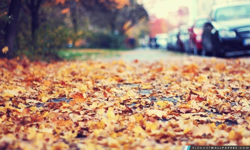 Fallen Leaves sur le trottoir, Arrière-plans HD à télécharger