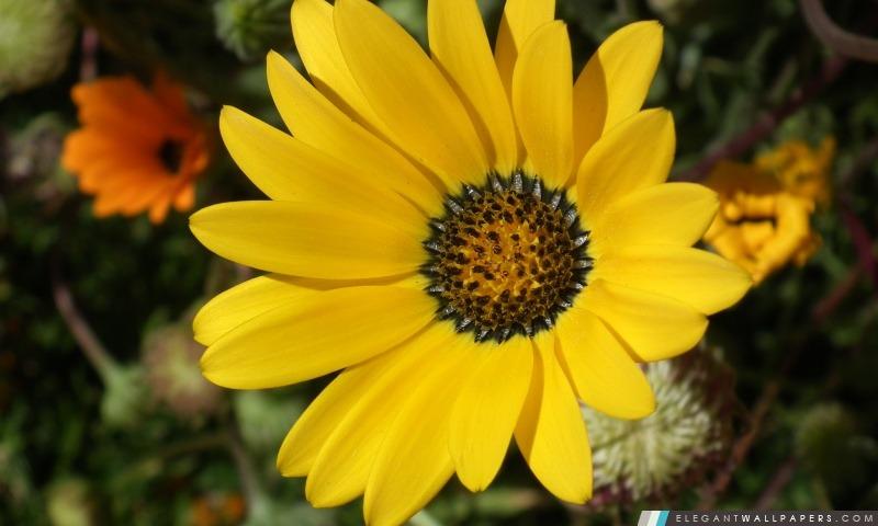 Fleur jaune, Arrière-plans HD à télécharger