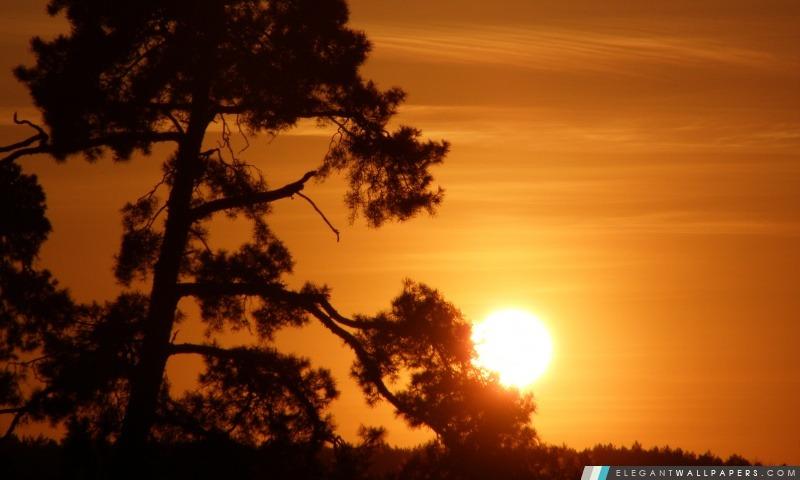 Soleil sur une branche d'arbre, Arrière-plans HD à télécharger