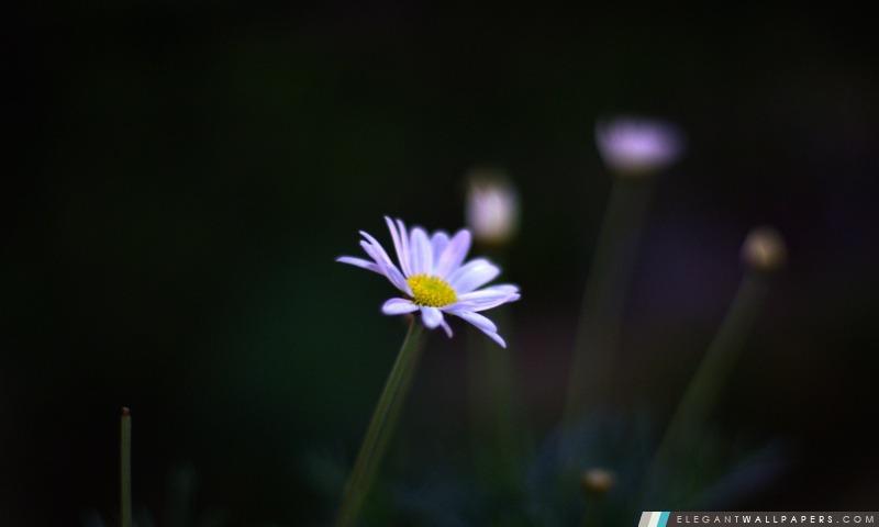Fleur De Nuit, Arrière-plans HD à télécharger