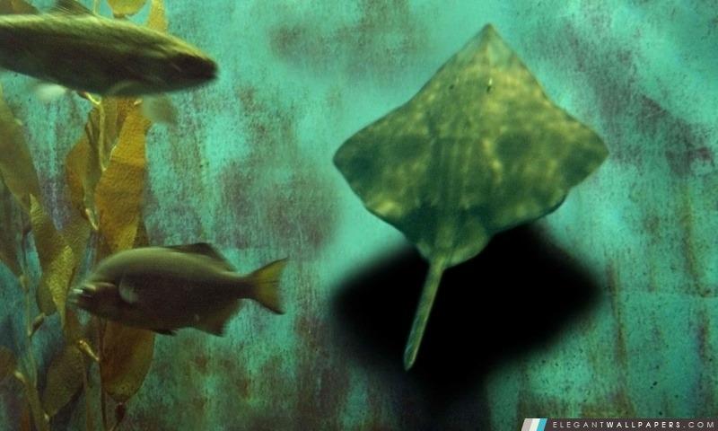Poissons d'aquarium, Arrière-plans HD à télécharger