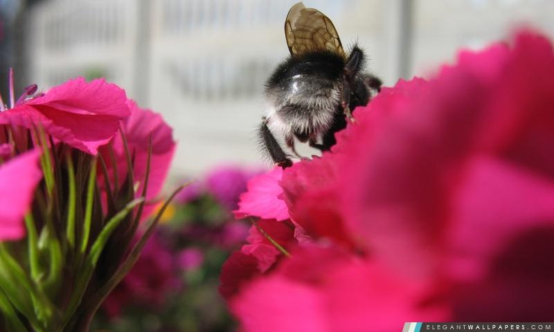 Abeille et fleur, Arrière-plans HD à télécharger